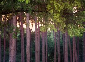Trees 2 by x-chriscross-x