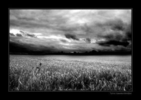Stormy days bw by grugster
