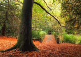Jesmond Dene by scotto