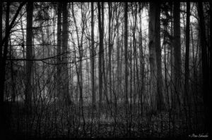 Among the shades. by Phototubby