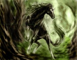 black horse by Nadide