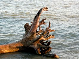 Uprooted Tree in the Water by Michies-Photographyy