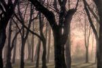 the forest2 by hubert61