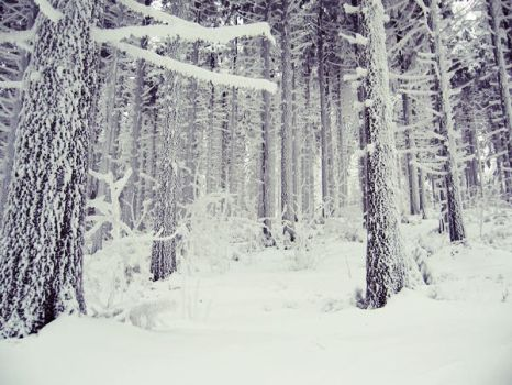 Forest in Winter II by Obsesyjna