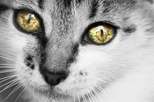 kitty eyes detail by sstando