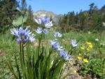 Mountain flowers by grmin