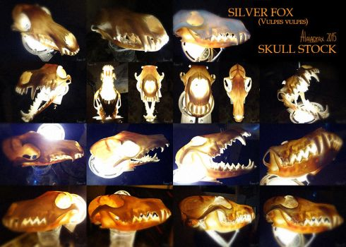 Skull Stock: Silver Fox - strong light by Alaiaorax