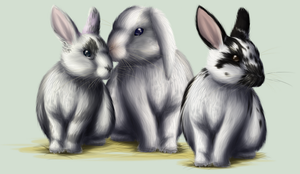 Bunnies by TinTans