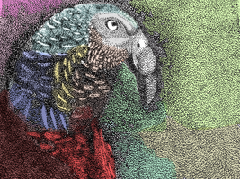 Parrot - colourized by themasterofnone