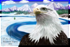 American Bald Eagle by Algren-Hayabusa