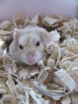 My Hamster's Face by jessicagorawr