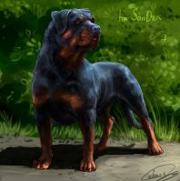 Rottweiler by LonGrand