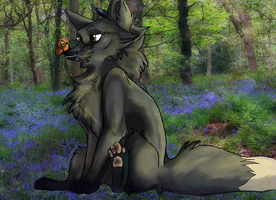 Point Commission - Butterfly by X-x-Magpie-x-X
