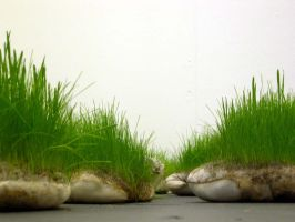 Grass Pillow - image 2 by claire-dix
