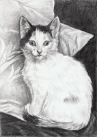 """Molly"" - kitten drawing by shmeeden"