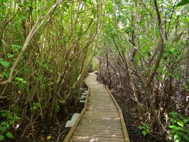 Island Forest Path by EndOfGreatness