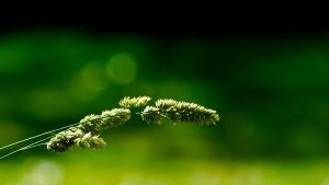 grass by LinuxEvolution