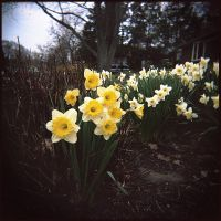 The neighbors - Apr 2011 by pearwood