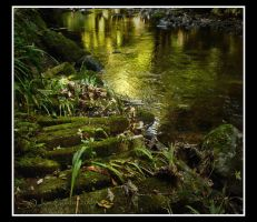 Autumn Green Reflections by JonGoldie