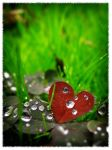 Heart of nature by my-eyes-your-windows