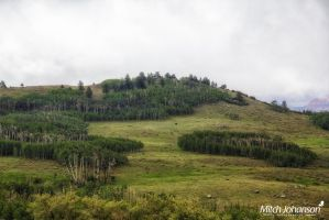 Clumps of Aspens by mjohanson