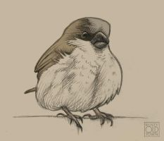 Sparrow by Rustyoldtown