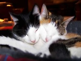 Kitty Love by jen-jamieson