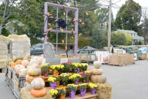 October 2014, Local Farm Stand Autumn Display 2 by Miss-Tbones
