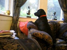 Watching the rain.... by sunnygirl979