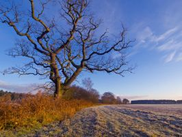 Morning Frost by davepphotographer