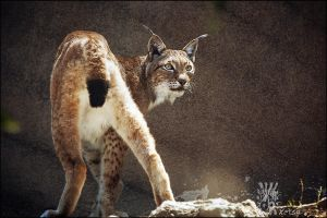 Modesty by XetsaPhoto