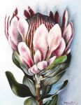 Protea by SamanthaJordaan