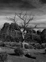 dead tree black and white by CorazondeDios