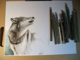 Wolf WIP by mwford
