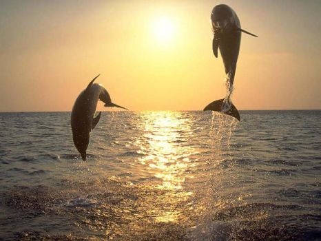 Dolphins by Jill2728