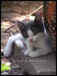 335 by evy-and-cats
