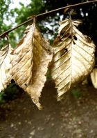 Brown Leaves by MonstArt