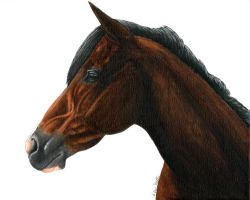 Horse Painting by Alley96
