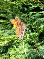 Butterfly by Stacey2512