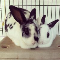 Bunny and Spot by ChicaDelMar