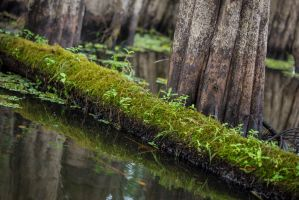 Moss on a Log by CHabio