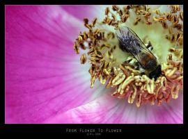 From Flower To Flower by Mr808