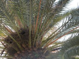 Parrot in a Palm by eillahwolf