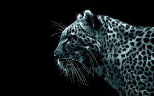 Leopard by Unknown artist by sunnydarkside