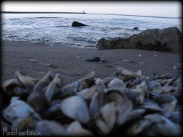 Shell Shore by MaddLouise