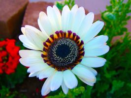 flower 15 by todds201