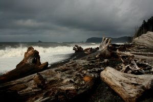 La Push by Pecetta