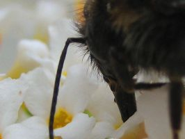 Perspective of a Bee by roarysea