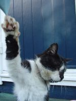 Felix, Talk to the paw by cat-lovers