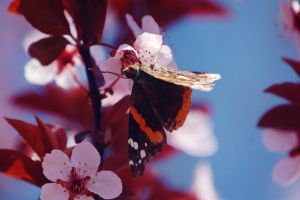 Butterfly In The Sky, I Can Fly Twice As High 1 by nazzara